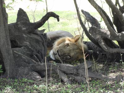 Tanzania_479