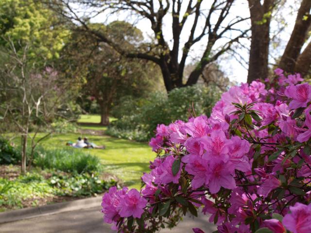 Melbourne_city_botanic_garden_099