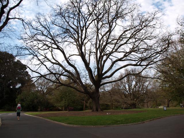 Melbourne_city_botanic_garden_141